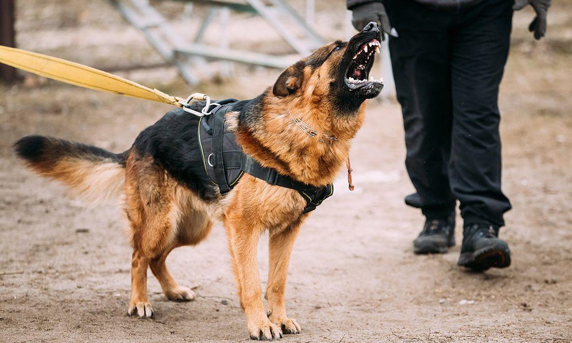 Dog Bite Claim - Personal Injury Law